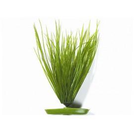 Rostlina MARINA Hairgrass 20 cm 1ks