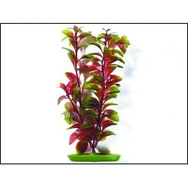 Rostlina MARINA Red Ludwigia 20 cm 1ks