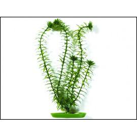 Rostlina MARINA Anacharis 13 cm 1ks