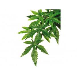 Rostlina EXO TERRA Abuliton malá 40 cm 1ks