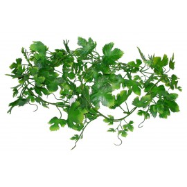 Lucky Reptile Gape Leaf Vine, ca. 200 cm