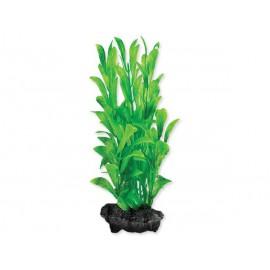 Rostlina TETRA Hygrophila S 1ks