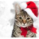 Vánoční dárky pro kočky